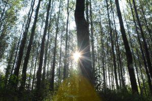Gele engelensluier in het Lemurisch Bos