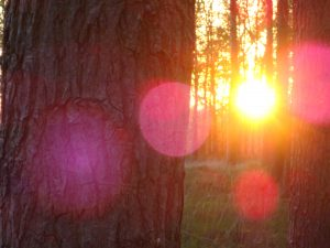 Roze orb lemurisch bos 2016